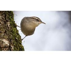 Wren bird house plans minnesota audubon Video