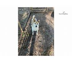 Wwwdogtrainingknoxville.aspx Video