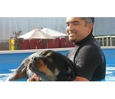 Youtube dog whisperer puppy training.aspx Video