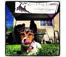 Zen dog training arlington.aspx Video