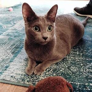 The Blues Cats